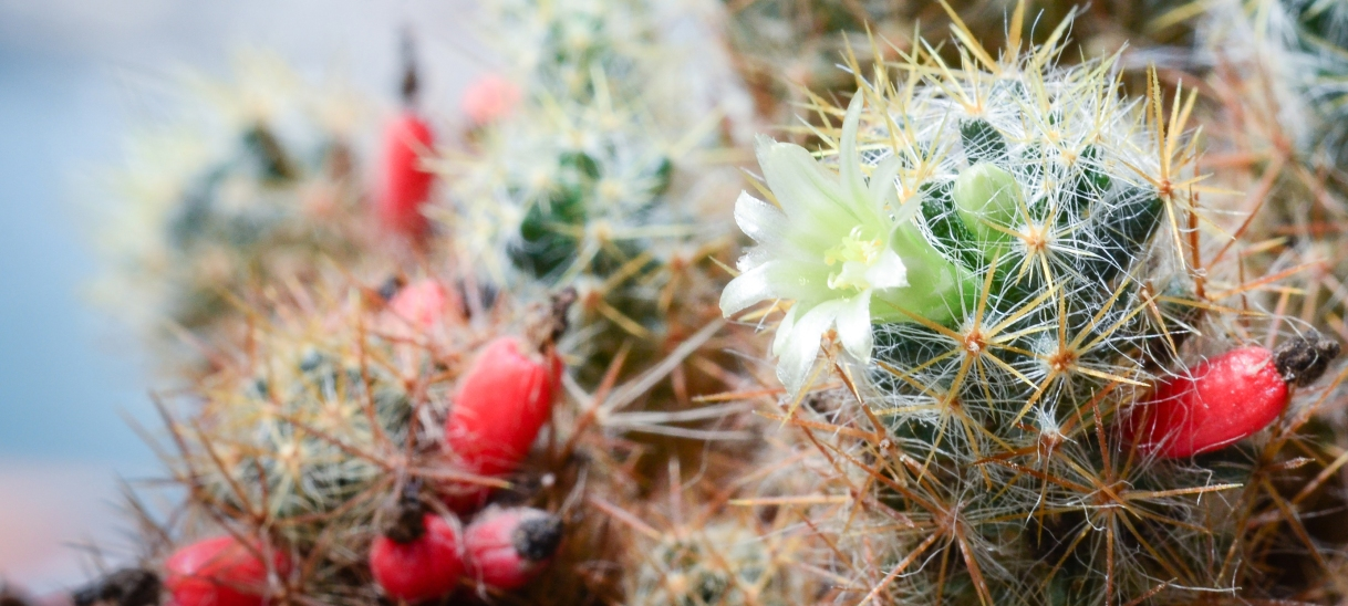 The Wisdom of a Cactus Flower