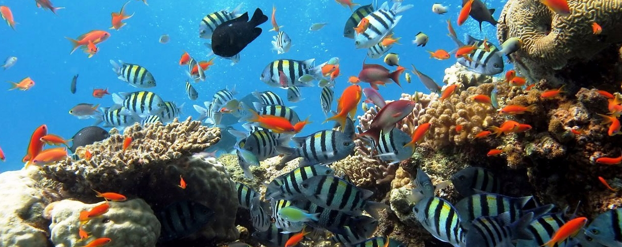 Snorkeling and Mindfulness ofThoughts
